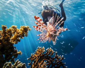 explore-nature-red-sea-scuba-diving-5-top-reasons-for-women-to-explore-scuba-diving